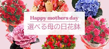 選べる母の日花鉢