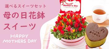 母の日花鉢&スイーツ